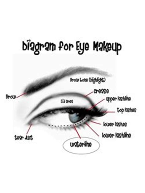 Diagram For Eye Makeup by All About Eye Products And How To Use Them Quirkybyte