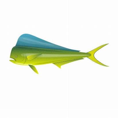 Mahi Fish Vector Dorado Ocean Illustrations Colorful