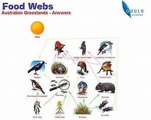 Post 6  Food Webs   U2013 A  Gittner