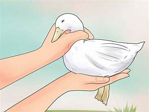 How To Care For A Pet Duck Wikihow