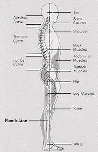 Mann Yoga Blog  How Do You Know When Your Spine Is Properly Aligned