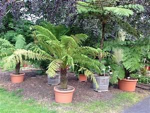 Pflanztopf Für Palmen : botanischer garten leipzig vom duften tasten und blauen ~ Lizthompson.info Haus und Dekorationen