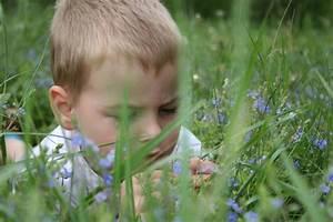Kirschlorbeer Giftig Für Kinder : glockenblume sind sie f r kinder giftig ~ Frokenaadalensverden.com Haus und Dekorationen