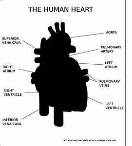 Artery  12 Images