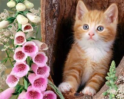 Cats Wallpapers Cat Kittens Kitten Pretty Kitty