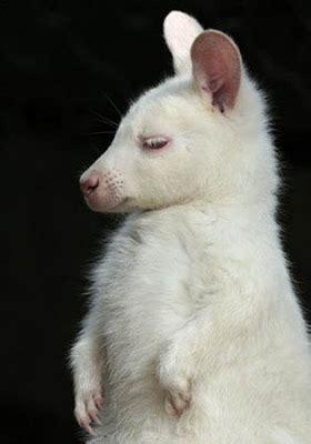 amazing beautiful albino animals
