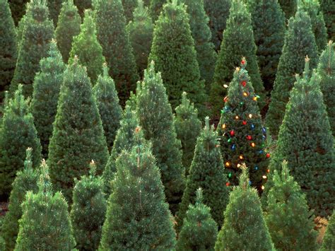 new year christmas tree decoration lights green forest hd