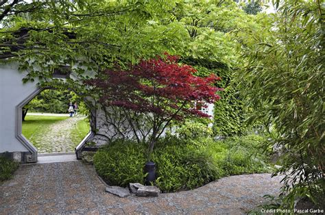 fiche pratique les 233 rables du japon d 233 tente jardin