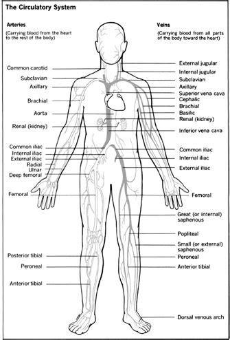 parts   circulatory system  circulatory system