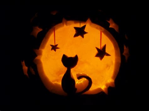 cat pumpkin ideas my silly owners carving pumpkins