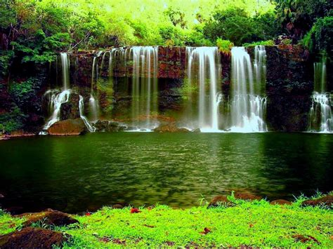 waterfall   thick green forest river pond weed hd