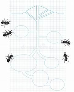 Diagram Of Ants Stock Vector  Illustration Of Hill  Graph