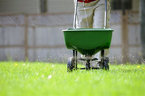 8 Steps On How To Fertilize Lawn Perfectly
