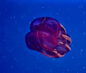 These Weird Sea Creatures Are SO FREAKY - I Couldn't ...
