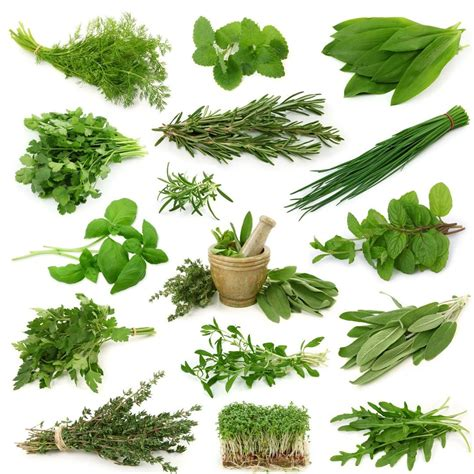 Herbs For Natural Hair 10 Of The Best Herbs For Hair