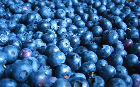 blueberry hd wallpapers background images wallpaper