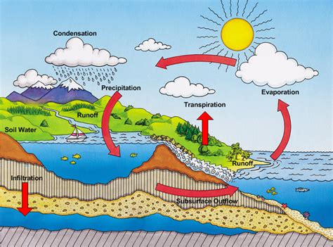 water cycle  catchment connection cool australia