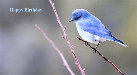 Bird Fe by January 5th Birthdays 50 World