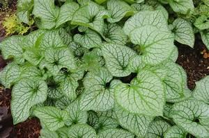 Pflanzen Für Nordseite : bodendecker pflanzen pflegen und tipps mein sch ner garten ~ Frokenaadalensverden.com Haus und Dekorationen