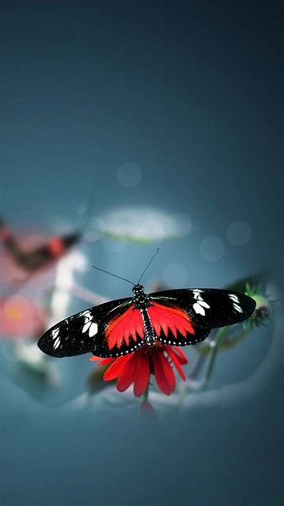 Butterfly Iphone Flower Nature Water Background Animal