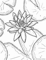 Coloring Lily Water Flower Adults Monet Pages Printable Drawing Lilies Adult Claude Sheets Waterlily Stargazer Drawings Ryanne Levin Flowers Templates sketch template