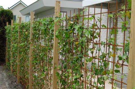 cloture vegetale sans entretien plante sans entretien