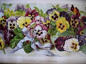 Nachbarrecht Bayern Art 47 Grenzabstand Von Pflanzen : 3369 besten sweet violets bilder auf pinterest veilchen ~ Articles-book.com Haus und Dekorationen