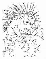 Porcupine Coloring Pages Cartoon Printable Attacking Mood Getcolorings Getcoloringpages Animal Cute sketch template
