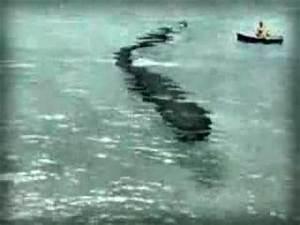 Japanese Sea Monster Sighting - YouTube