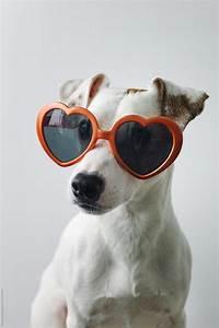 small wearing sunglasses by duet postscriptum
