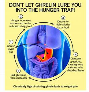 Belly Fat Fix - Ghrelin, the key hormone to help your