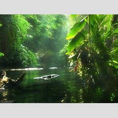 Jungle Hd Photo Wallpapers 5319  Amazing Wallpaperz