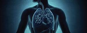 A Look Inside The Lungs  Chronic Bronchitis  U0026 Emphysema