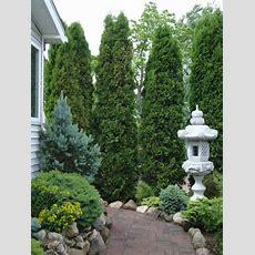 Different Types Of Gymnosperm Plants  Wearefound Home Design