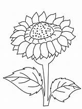 Sunflower Coloring Pages Adult Flower Printable Flowers Bright Choose Colors Favorite Recommended sketch template