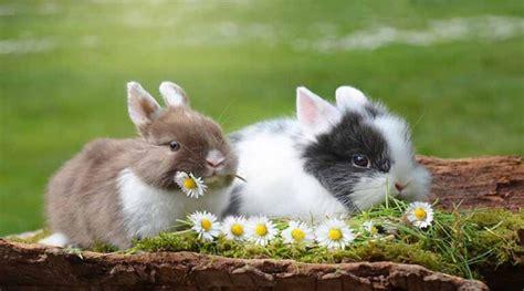 5 อันดับสายพันธุ์กระต่าย ที่คนนิยมนำมาเลี้ยงมากที่สุด?? ⋆ ...