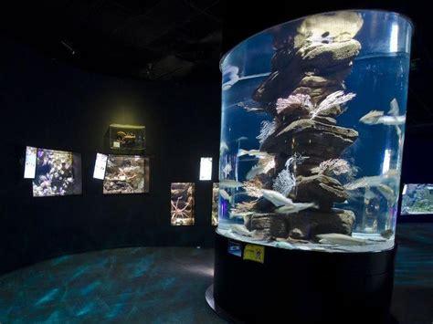horaires bureau de tabac aquarium de cineaqua ce qu 28 images aquarium cineaqua