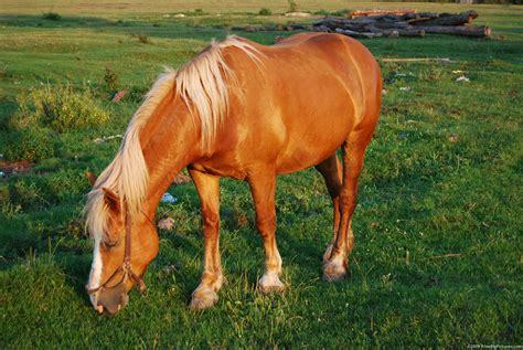 pony horse horses freebigpictures resolution random 1360 kb previous