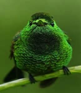 Animals Green Bird
