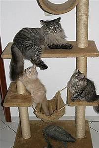 Katzenkratzbaum Selber Machen : katzen kratzbrett selber machen katzen kratzbrett selber bauen diy katzenspielzeug selber ~ Yasmunasinghe.com Haus und Dekorationen