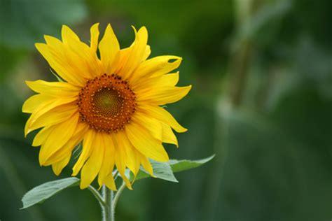 kathy stanczak fine art photography flowers
