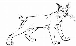Bobcat Ready To Hunt Coloring Pages Best Place To Color