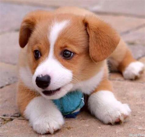 Weitere ideen zu hunde, süße tiere, süße hunde. Wie süß Welpen sein können | Süße baby tiere, Süßeste haustiere, Tierbabys bilder