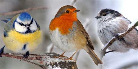 10 garden birds britain and britishness