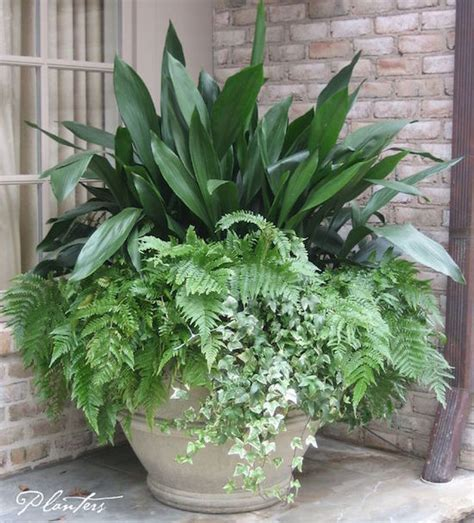 ferns in planters 7 container gardening ideas beyond summer flowers