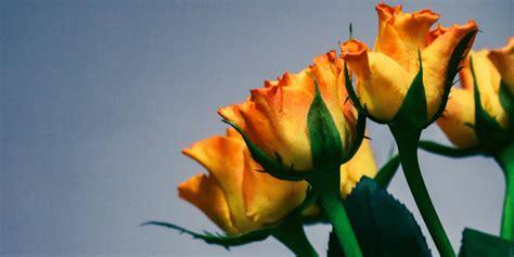 was bedeuten gelbe 9 blumen und ihre geheime bedeutung
