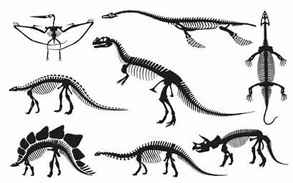 Dinosaurs Many There Dinosaur Species Why Were