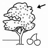 Coloring Tree Cherry Pages Preschool Worksheets Preschoolactivities sketch template