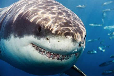 happy shark week heres   terrifying photograph