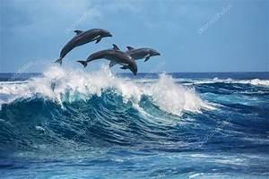 Schöne Delfin Bilder : sch ne delfine im ozean stockfoto vitaliy sokol 118994652 ~ Frokenaadalensverden.com Haus und Dekorationen